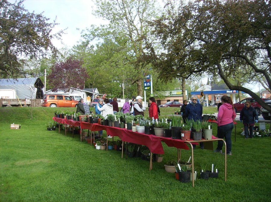 Plant Sale-Tweed and District Horticultural Society