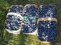 Wilson's Organic Blueberries