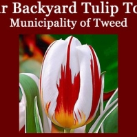 Backyard Tulip Tour